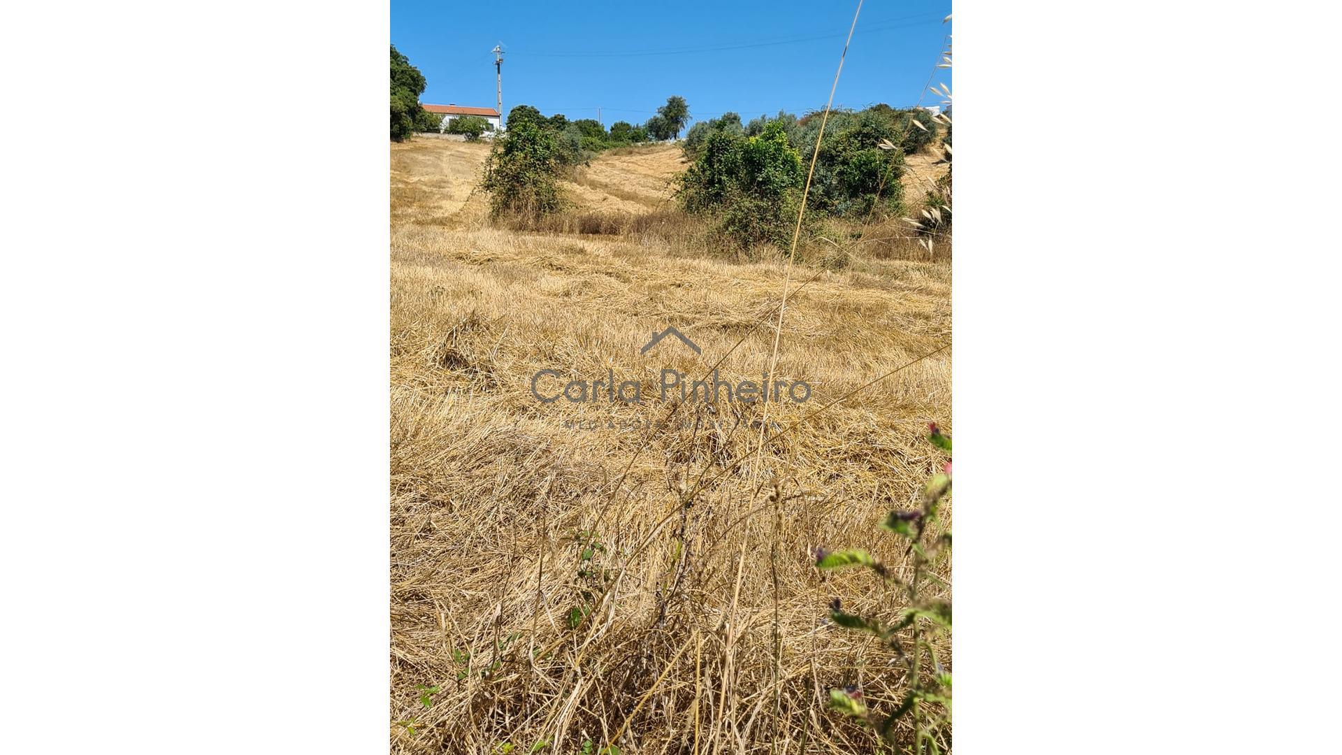 Quinta em Cercal do Alentejo  - Santiago Do Cacém, Cercal